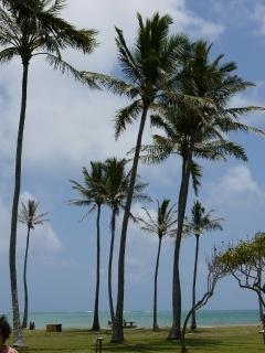 クアロアビーチパーク.jpg